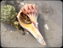 The Living Shell